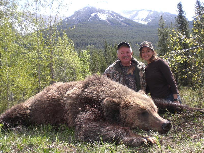 beautiful big grizzly bear harvested in BC